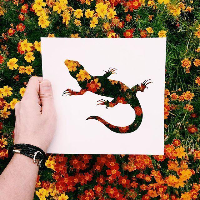 komodói sárkány