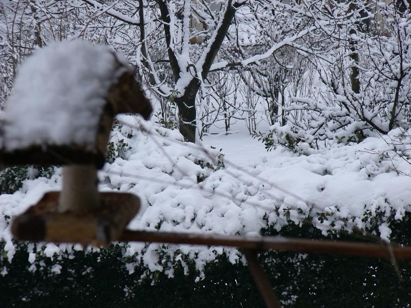 madáretető a hóban